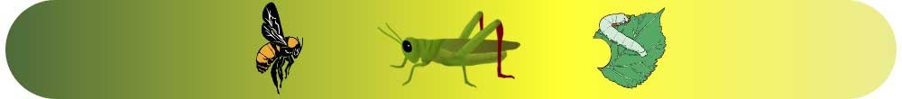 Böcek Yetiştirin