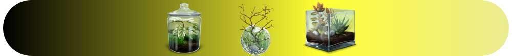 Teraryum ve Minyatür Bahçe Yapmak